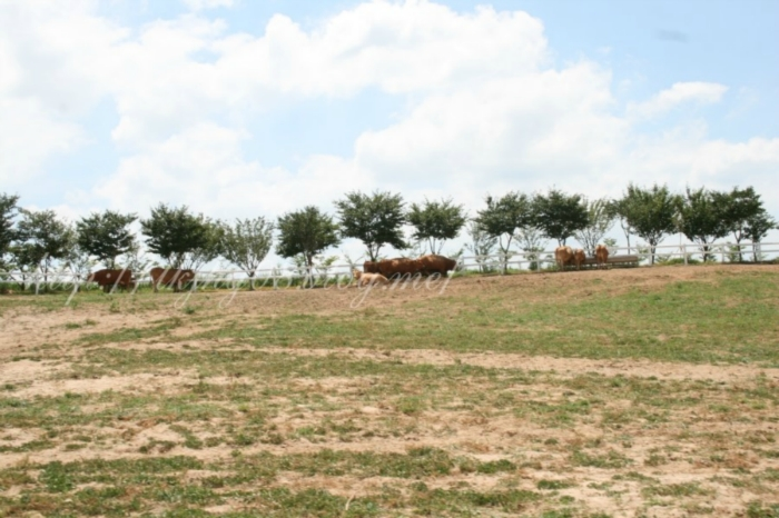 태산목장 농장체험학습